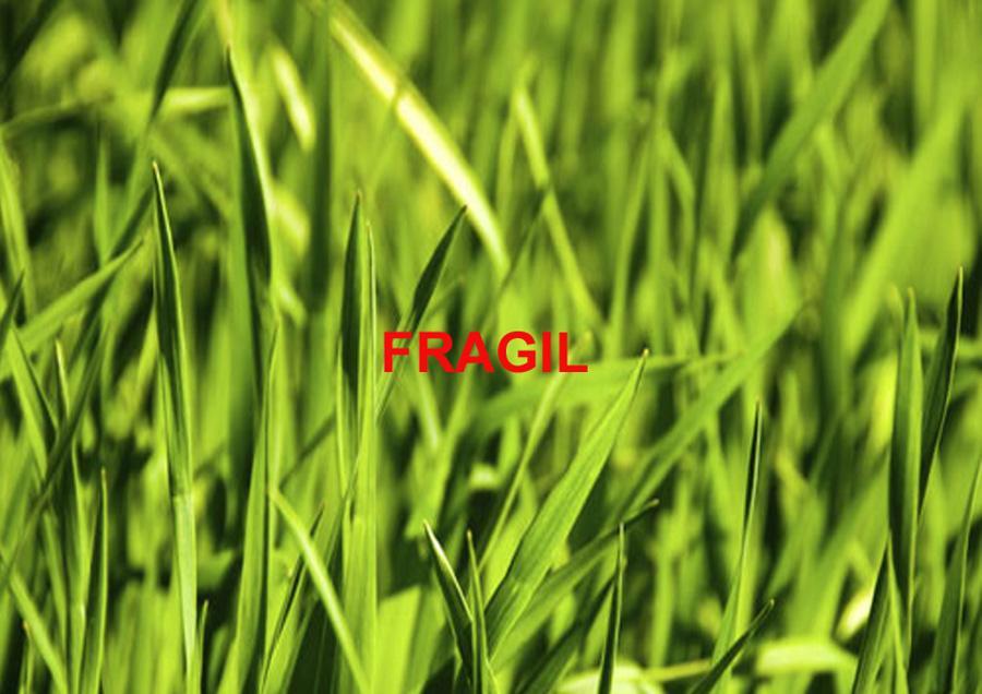 2002-Fragile